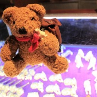 Little Bear from Phuket Fantasea